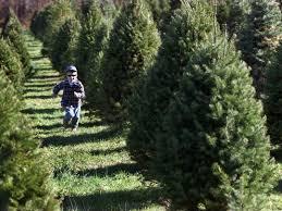 Mansfield Christmas Tree Farm  Home  FacebookChristmas Tree Cutting Nj