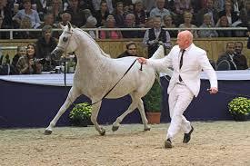 Rainy Day At Malvern by Betty Finke We... - Arabian Horse World ...