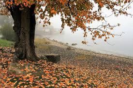 200+ Free Dead <b>Branches</b> & <b>Tree</b> Images - Pixabay