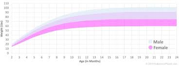Average Weight Chart Female Doberman Weight Growth Curve And Average Weights Doberman