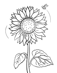 Small Picture Free Sunflower Coloring Page