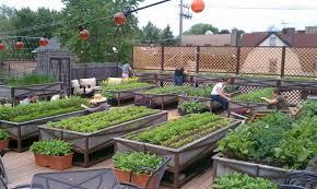 fall rooftop vegetable gardening easy conner vegetables for