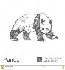 Panda Disegno Degli Animali Vectore Illustrazione Vettoriale
