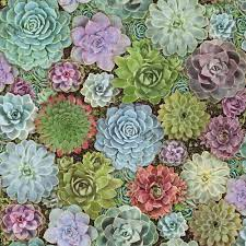 York Wallcoverings Succulents Peel and ...