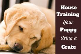 Puppy House Training Chart How To Use A Crate To House Train A Puppy
