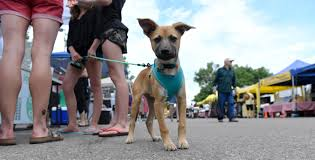 why dogs should be banned from public events letters