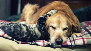Cute Cats Dogs Wallpaper (Page 1) - Line.17QQ.com