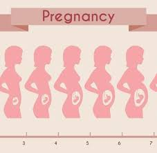 34 Timeless Pregnancy Stomach Measurements Chart