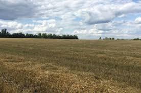 Купить земельный участок в районе Ставропольский в регионе  Купить земельный участок 560 соток Ягодное с