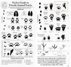 Florida Animal Tracks Identification Google Search