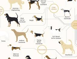 dog chart the diagram of dogs a dog breed infographic poster by pop
