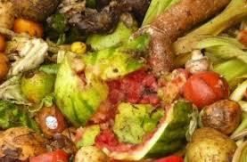 Resultado de imagen para basura organica