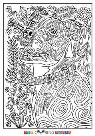 Small Picture Free printable American Pit Bull Terrier coloring page available