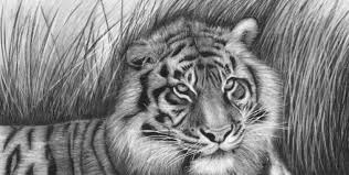 Wild drawing of animals Elephant 40 Beautiful Animal Sketches 1 Pinterest 40 Beautiful And Realistic Animal Sketches For Your Inspiration
