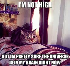 Trippy Cat memes | quickmeme via Relatably.com