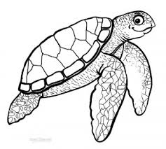 Small Picture Hawksbill Sea Turtle Coloring Pages Sea and Ocean Animals