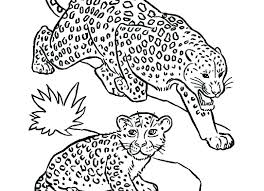 Leopard Coloring Pictures To Print Seal Pages Baby Snow S Lovely Of