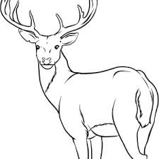 Small Picture Animals Coloring Pages Gt Deer Coloring Pages Gt Deer Coloring