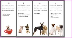 dog breed size chart best medium sized dog breeds chart paketsusudomba co picture of cute