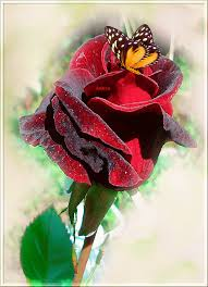 Resultado de imagen para rosas gif