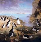 pinguinus