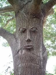 genuine tree ple whistlin pete tree face garden outdoor decor for