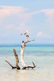 Seagull Driftwood Perch Photograph by Christina Carlson