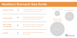 How Many Diapers Per Day Chart Newborn Stomach Size Breastfeeding For The First 12 Months