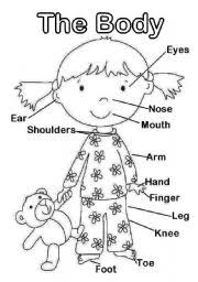 thumb901091956441831 english teaching worksheets face and body on worksheets parts of the body for kindergarten