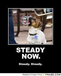 STEADY NOW.... - Meme Generator Posterizer via Relatably.com