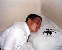 hoeveel spinnen eet je in je slaap