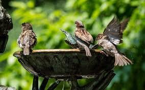 sparrow water birds monument bath lamp books table lights portrait hd wallpaper desktop background