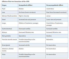 Divisions Of The Autonomic Nervous System Anatomy And