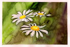 watercolor daisies by the starhorse