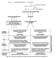 Nutritional Forms Of Microorganisms With Diagram