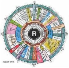 10 Conditions That Iridology Can Detect Better Living