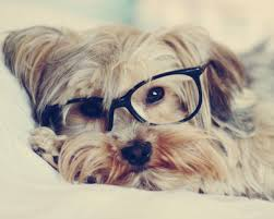 z wallpaper pet puppy awesome 393