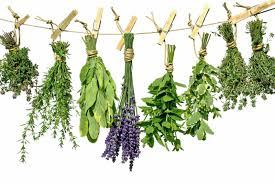 Herb Garden Top Ten Herbs For A Herb Garden The Garden Of Eaden