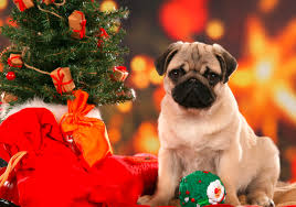 christmas puppies wallpaper. Delighful Puppies Intended Christmas Puppies Wallpaper S