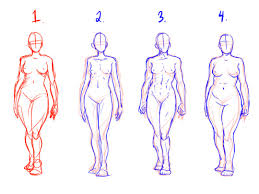 Its functions are stopped by death. Female Human Body Drawing