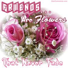 Beautiful Roses With Friendship Quotes Best of Flowers Friendship Feeling Notes Handsome Rose Music Beautiful Pink