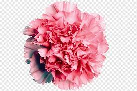 carnation flower arranging white