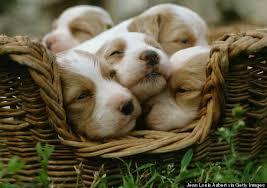 cute baby dog. Plain Cute Cute Dog To Cute Baby Dog