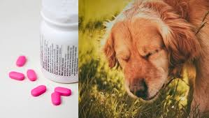 Dog Antihistamine Dosage Chart Benadryl For Dogs Dosage Uses And Side Effects Dogtime