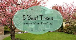 How To Plant Privacy Trees  Pretty Purple DoorGood Trees For Backyard