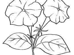 Di Disegno Fiori E Con Stilizzati Da Colorare Zucca 15 6bgyf7