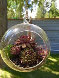 set of 2 clear hanging air plant globe terrarium 4 5 inches diy bonsai vases