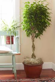 cool office plants. Best Office Plants For Inspiring Unique Interior Potted Plant Ideas: EnviroGreenery And Cool E