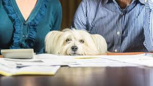 6 Dog-Related Tax Deductions You May Be Eligible to Claim - The ...