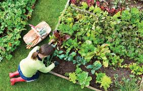 how to turn your organic vegetable garden into a successful business